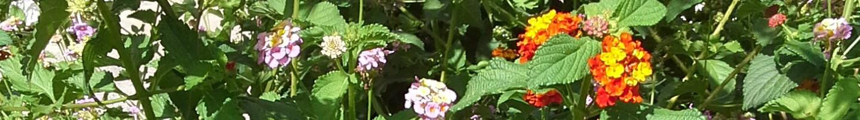 Gartenfreunde Jülich Heckfeld e.V